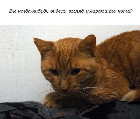 История одного доброго кота. Грустно....