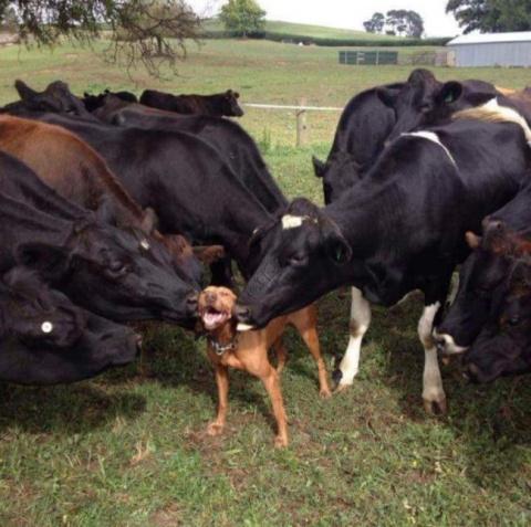 Животные, которые доказывают…