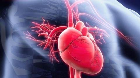 Неожиданные факты о сердце и крови