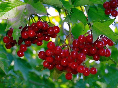 Растения, защищающие от нечистой силы и негатива