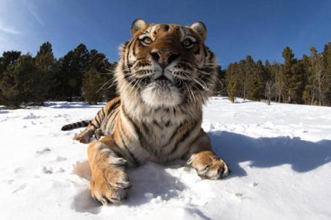 кыс-кыс на снегу