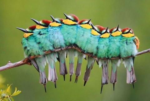 Птицы тоже любят обниматься