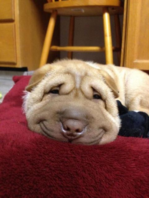 Минутка позитива - собаки-ул…