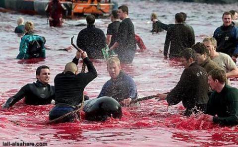 """Скажем """"НЕТ""""  убийцам китов!"""