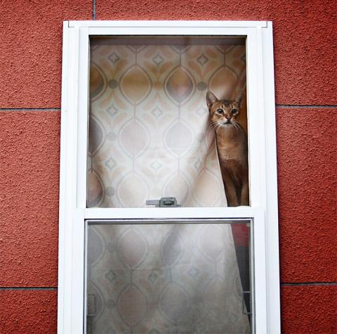 Пушистые ждуны: подборка кот…