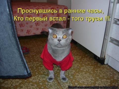 Свежая котоматрица для отлич…