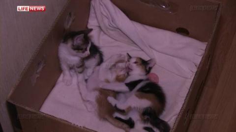 Брошенная кошка спасла своих котят в чужой квартире
