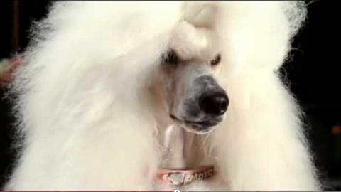 Прикольная реклама с собаками