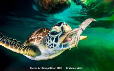 Стали известны победители конкурса «Ocean Art Contest»