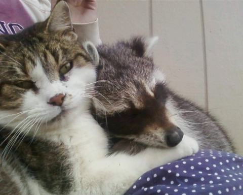 Кот помогает своей маме спас…
