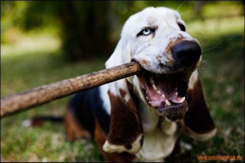 10 плюсов собачьей жизни