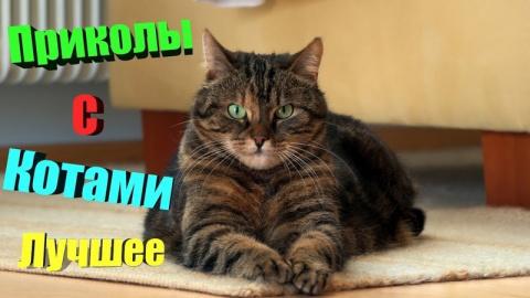 Свежая подборка смешных коти…