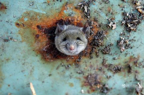 Спасение крысы, застрявшей в мусорке