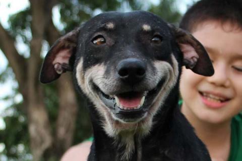 Клуб счастливых собак