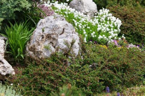 10 идеальных растений для со…