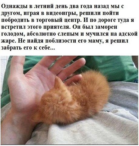 История одного кота...