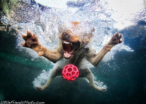 Невероятный позитив: Собаки …