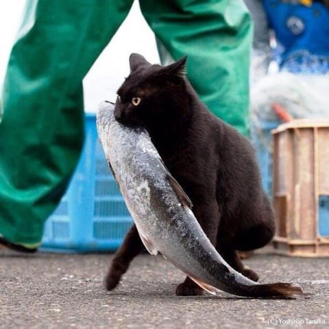 Рыбалка  похожая на боевик)