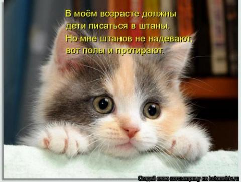 Свежая котоматрица для настроения)