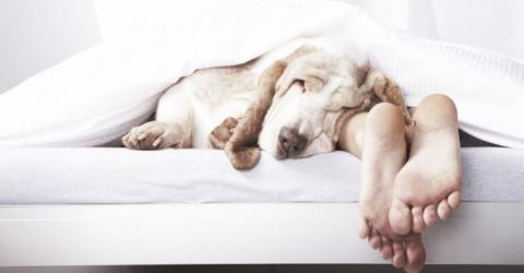 Секрет спокойного сна раскры…