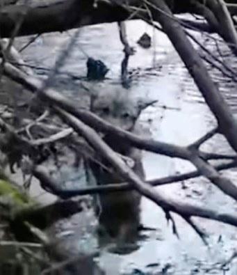 Раненый волк стоял в ледяной воде, не имея сил выбраться на сушу...и мысленно прощался с жизнью