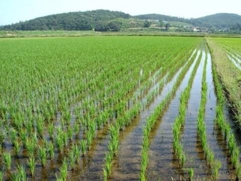 Вопросы развития отрасли рис…