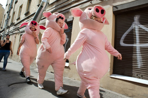 Свиные рыла вместо лиц
