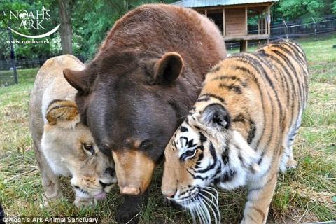 Умер лев Лео из знаменитой «троицы друзей»