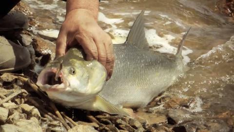 Рыбалка в Дельте Волги. Ловля щуки, жереха и сазана.