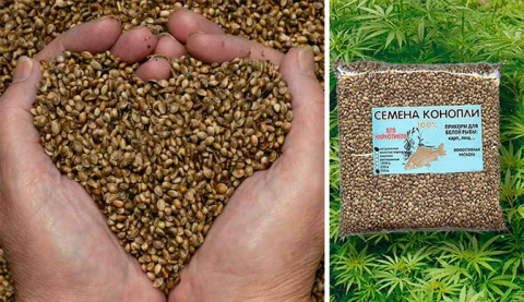 Поразительные свойства конопляных семян + 6 здоровых рецепта