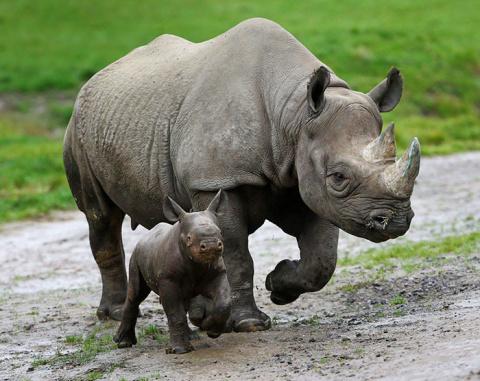 В национальном парке отстреливают людей, чтобы сберечь носорогов