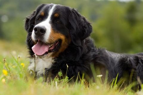 Живу в частном доме. Есть у меня пёс, здоровенный добряк Бим, а у Бима есть одна слабость…