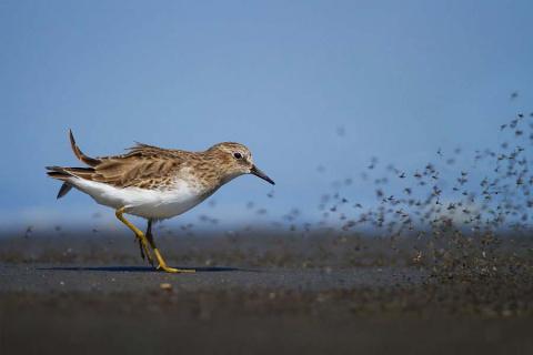 Через тернии к любви: эти птички преодолевают 13 000 километров в поисках пары