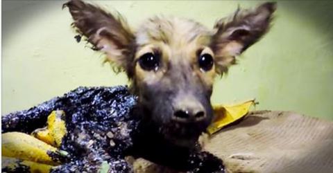 Невероятное спасение щенка у…