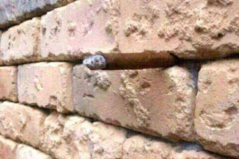 Этот «камешек в кладке кирпи…
