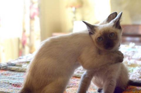 Кошачьи обнимашки
