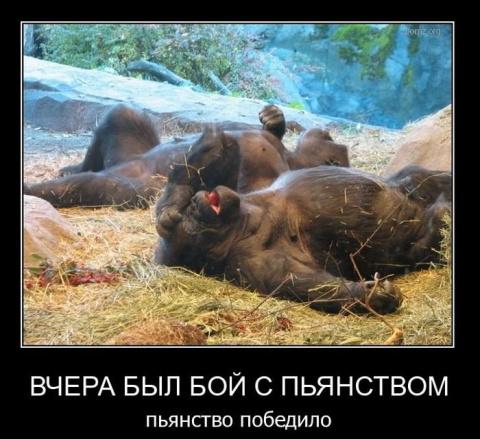 Веселая подборка))
