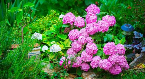 Декоративные кустарники: календарь цветения