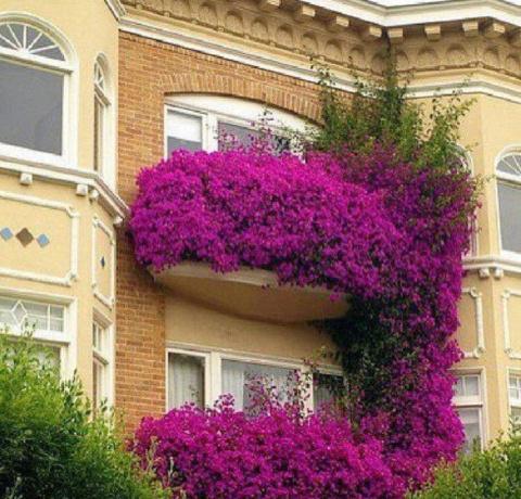Как превратить балкон в сад Семирамиды: впечатляющие идеи