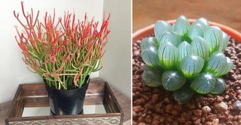 12 дивных комнатных растений, о которых ты еще не знаешь! Мечтаю о № 7