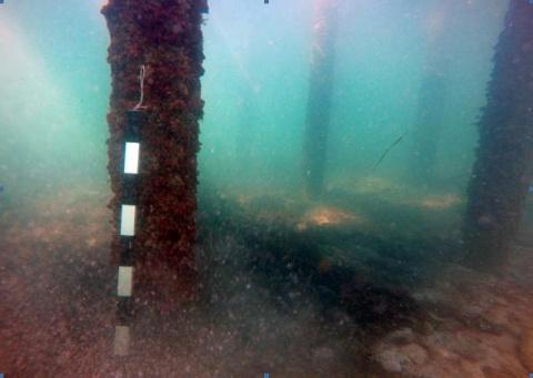 Подводные археологи в Крыму нашли пять деревянных судов XIX века