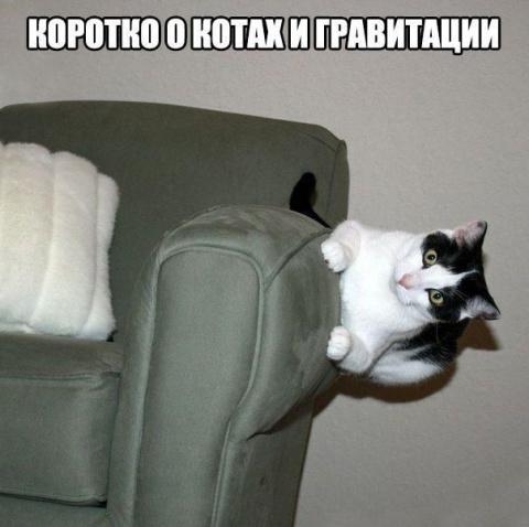 Смешные картинки и фото с на…