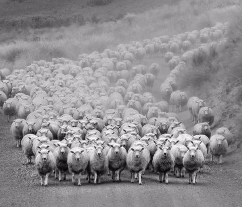 Опыты над стадом. Жестоко, н…