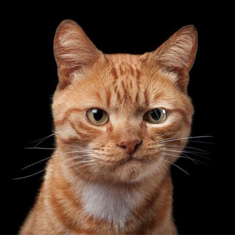 Всемирный день кошек. Галерея эмоциональных котов