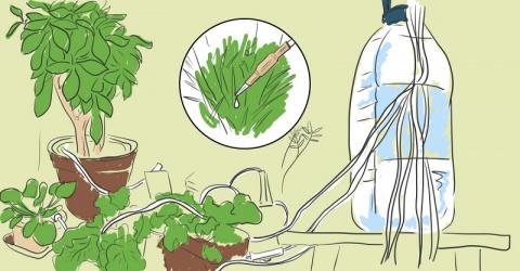 Растения будут поливать себя сами! Автоматическая система, продуманная до мелочей!
