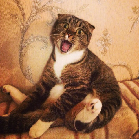 Смешные звуки издаваемые кот…