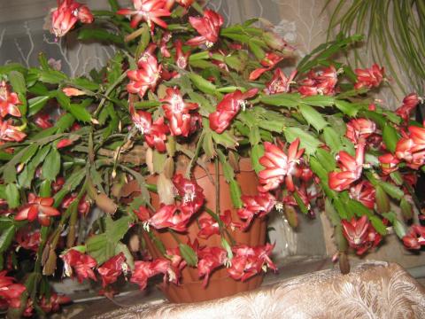 Наши любимцы-цветы на подоконнике 2