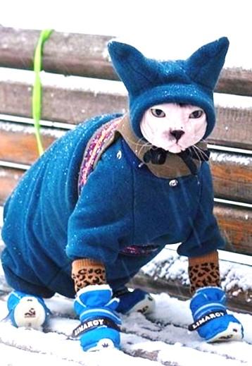 Можно ли сфинксу гулять на улице зимой? Замерзнет? А если одеться, как бабушка сказала?