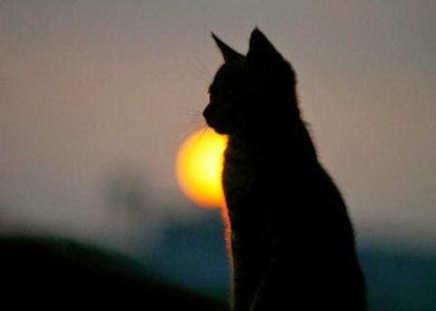 История про кошку и её человека