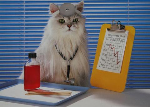 Препараты для кошек и котят - ветеринарная аптечка у вас дома. Чего боится ваша кошка?